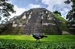 Tikal.