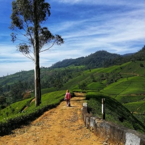 Sri Lanka, piantagioni di tè.