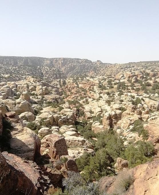 Riserva di Dana, Giordania.